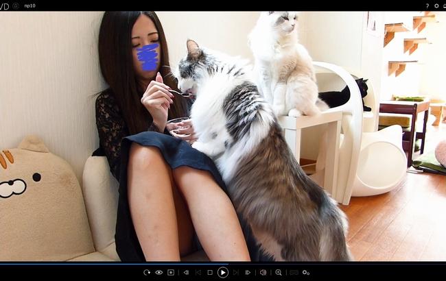 pcolle ねこパンツ ギャルで可愛い従姉妹のパンツ!猫カフェでテンション上がってパンチラ・パンモロ撮り放題 その2【顔出しパンチラ隠撮】
